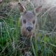 Rehkinder in Gefahr: Warnung vor falscher Tierliebe