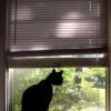 Verhängnisvoller Instinkt: Offene Fenster können für Katzen lebensgefährlich sein