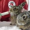 Gefundene junge Wildtiere: Nicht alle brauchen menschliche Hilfe!