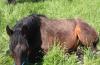 Magenprobleme beim Pferd – das oft unerkannte Leid