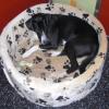 Futtermittelallergien bei Hunden