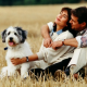 Aktuelle Studie: Heimtiere sichern bis zu 200.000 Arbeitsplätze