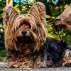Hund anschaffen – doch welchen?