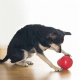 Spielen mit dem Hund – aber richtig