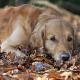 Arthrose beim Hund: Was in den Gelenken passiert