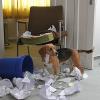 Halter haften für ihre Tiere – Versichern lohnt sich