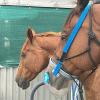 Pferde: Alarmsignal Husten