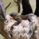 Doppelter Zuwachs an exotischen Tierbabys in Herberstein
