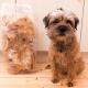 Kauartikel für Hunde können Salmonellen enthalten