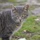Skurriles aus der Tierwelt: Animalische Flitzer