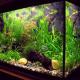 Gründe für den Kauf eines Aquariums für Ihre Kinder