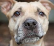 Bleib gesund – bleib zuhause: Beschäftigungstipps für Haustierbesitzer