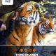 Zoos und Tiergärten benötigen Unterstützung und Soforthilfe
