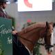 Vorbereitungen für die Faszination Pferd 2020 laufen