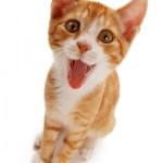 Katzen iStock_000007039421XSmall