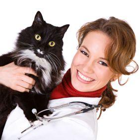 ONLINE DOC mit Katze / © Sean Locke - iStockphoto