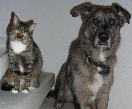 Linus, gerettet aus der Hundehölle in Apulien