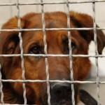 Hundehölle in Apulien