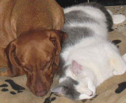 Hund und Katze im Glück