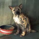 Stiftung Tier im Recht - Schweiz