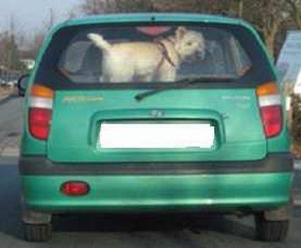 Tierschutz - Hitzetod im Auto