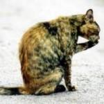 Streunerkatzen Kastrationsprojekt Burgenland