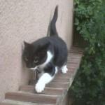 Katzentreppe