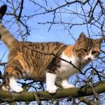 Katze auf Baum
