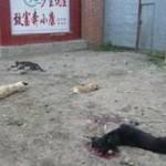 Quelle: IFAW.de - Massentötung von Hunden in China