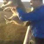 Tierquäler wirft Hund von Brücke