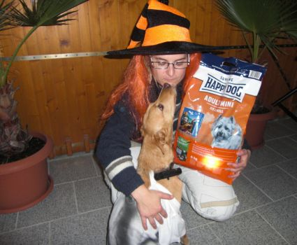 BELLOWEEN: Halloween für Hunde - powered by Happy Dog