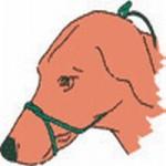 Schnauzenband anlegen / Royal Canin