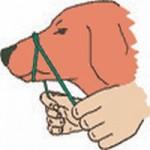 Schnauzenband binden / Royal Canin