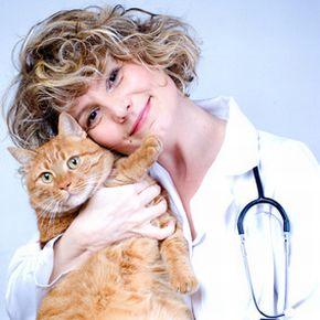 Online Doc mit Katze / © Lemonade - fotolia.com
