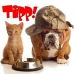 Der gute Tipp für Hund & Katze! / © Willee Cole - iStockphoto