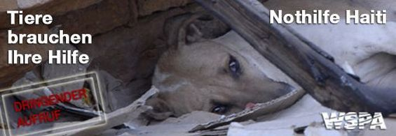Tieren zu helfen, hilft Menschen - WSPA