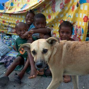 Haiti-Erdbeben-Katastrophe: Tieren zu helfen hilft Menschen / © WSPA