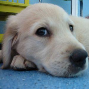 Hunde haben die Nase vorn! / Foto: Hirczy Entertainment
