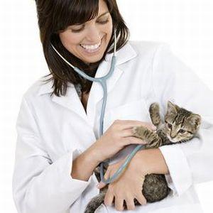 Tierarzt mit Katze / © Davis - iStockphoto