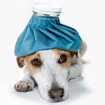 Erfahrene Veterinärmediziner beraten Tierbesitzer